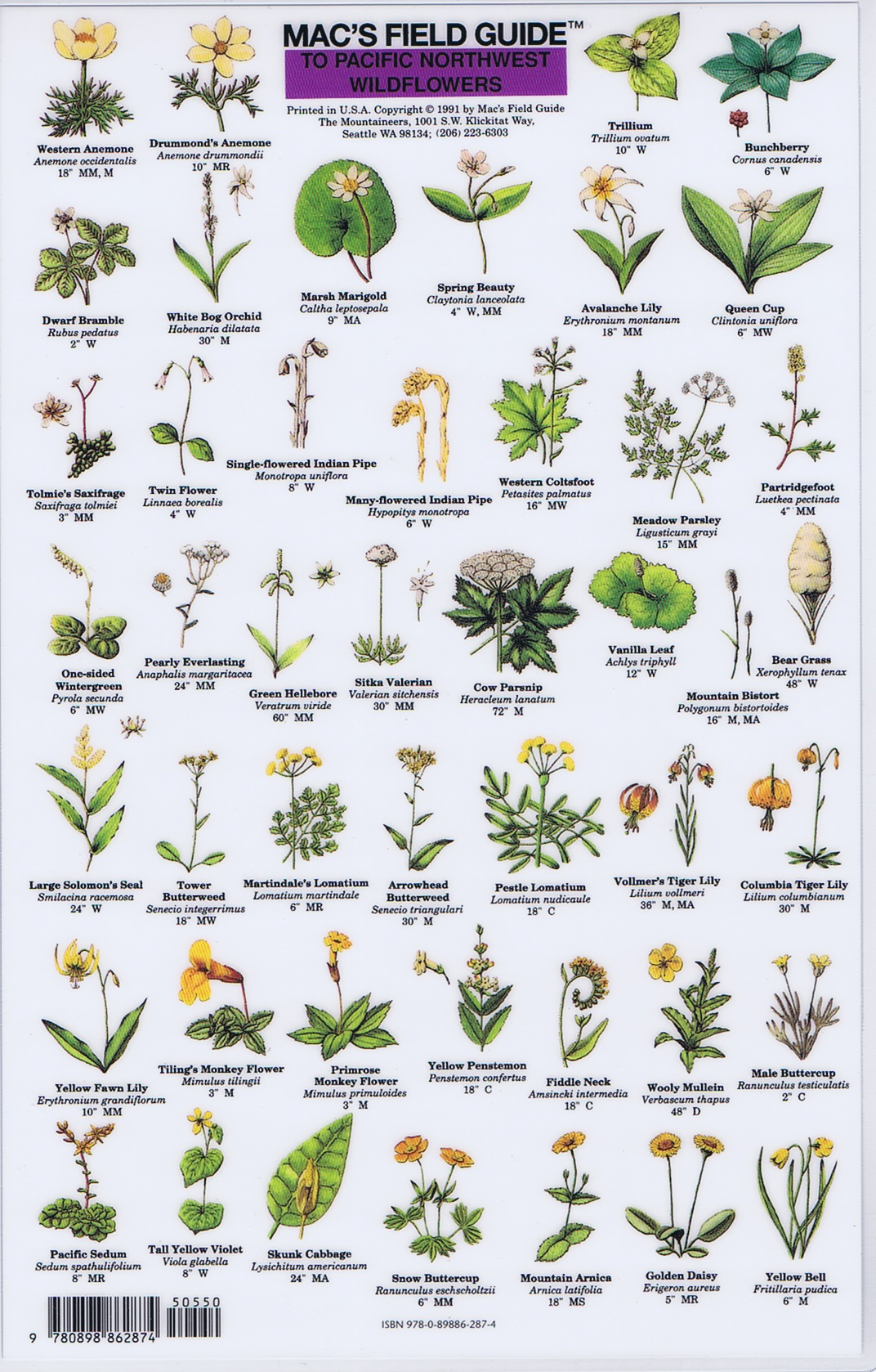 flower identification guide by color